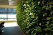 Green Walls absorb greenhouse gases and increase oxygen levels.