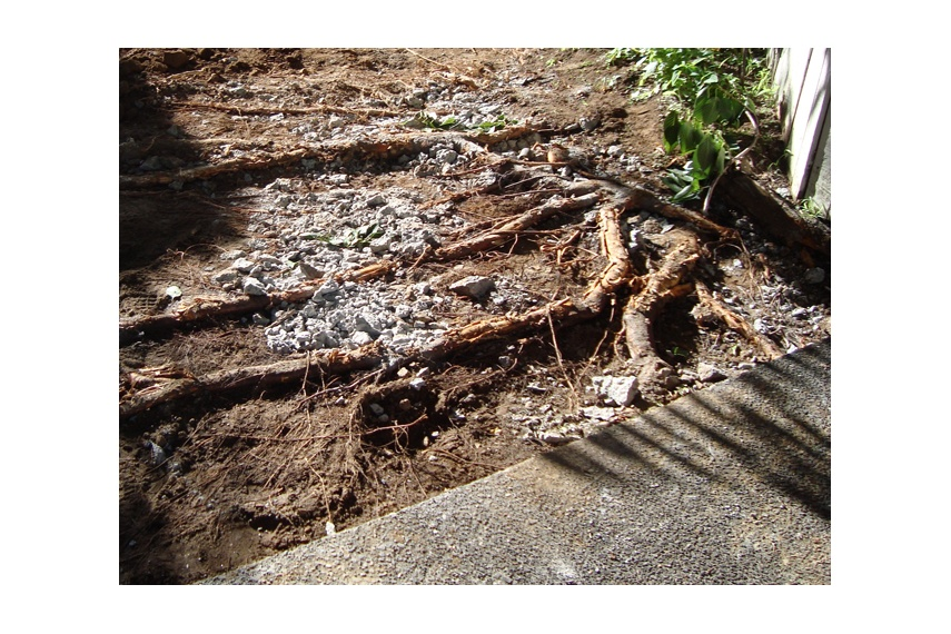 Preparing to replace paving while still retaining significant surface roots