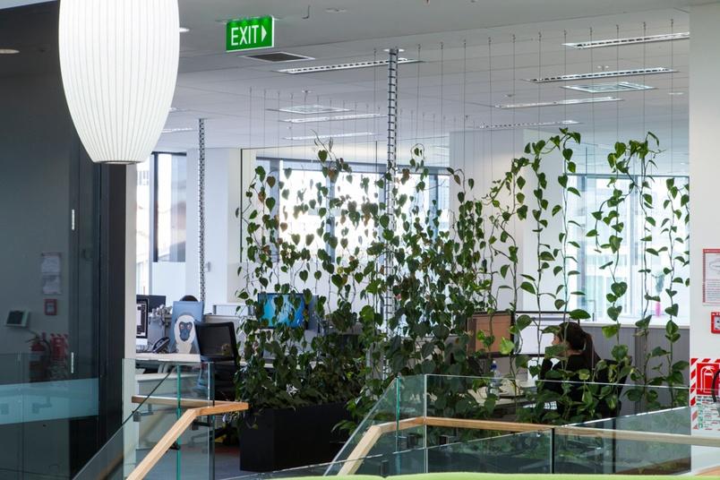 Internal Green Facade as a wall divider by GreenAir