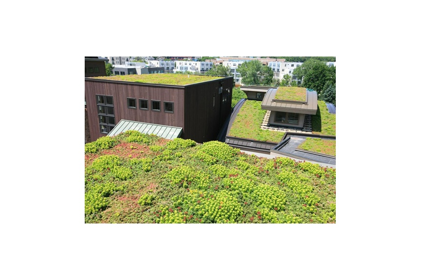 Liveroof 174 Green Roof System By Stormwater360 Selector