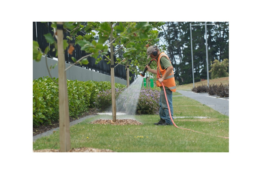 Aftercare maintenance of recently planted trees, Highbrook Business Park, Auckland