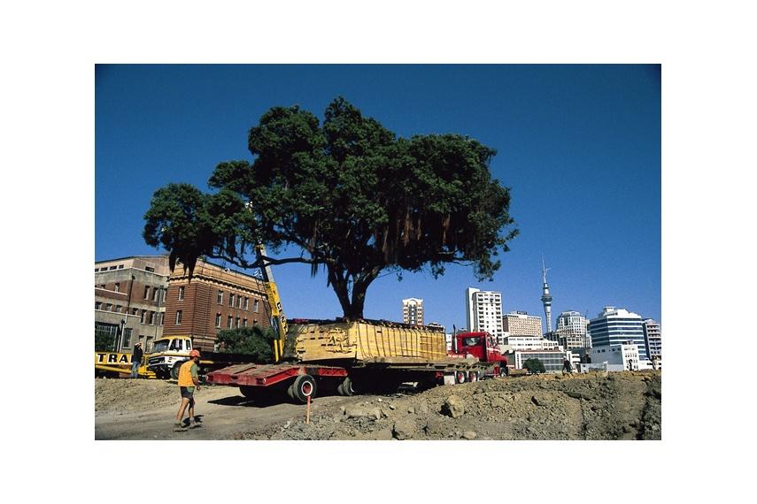 Transplanting of mature Pohutukawa tree utilising two 100 tonne cranes, Quay Park, Auckland