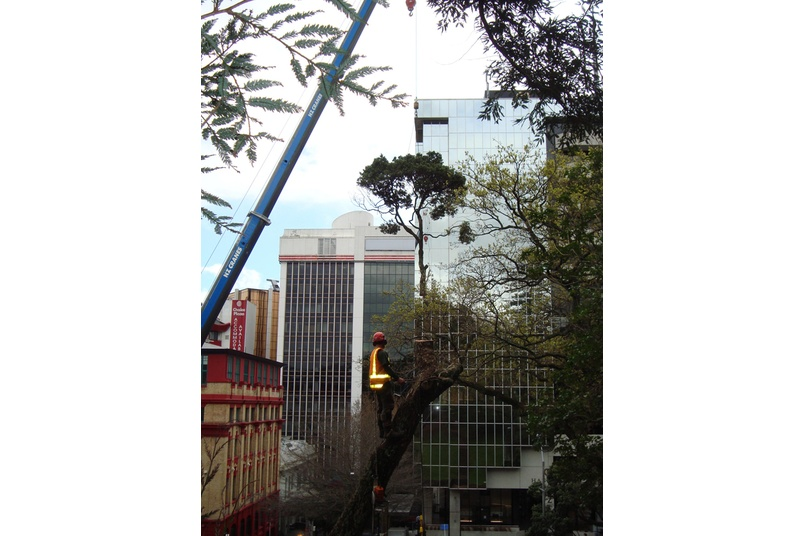 Tree removal for extension to Auckland Art Gallery