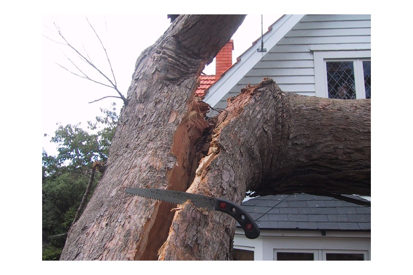 Inspection of storm damaged tree